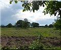 TL9195 : Heathland next to the Peddars Way by Mat Fascione