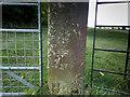 SO3384 : Benchmark on a gatepost by Neville Goodman