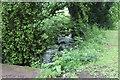 SO2800 : Nant y Gollen, Pontypool Park by M J Roscoe