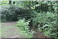 SO2800 : Overgrown footbridge, Nant y Gollen, Pontypool Park by M J Roscoe