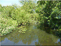 TQ0577 : River Colne by Robin Webster