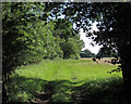 TL6505 : Looking out from Lady Grove, Writtle by Roger Jones