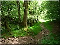 SO2631 : Track down Nant y Ffin to Ty Shore and the Hay Road by Christine Johnstone