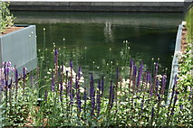 TQ2681 : View of flowers by the water in Floating Pocket Park in the Paddington Basin by Robert Lamb