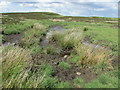 NO2006 : Peat bog, Lomond Hills by Bill Kasman