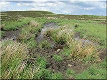 NO2006 : Peat bog, Lomond Hills by Bill Kasman