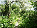 SM9302 : The Pembrokeshire Coast Path near Greenhill by Dave Kelly