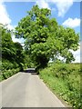 SP2626 : Ash tree in the hedgerow by Philip Halling