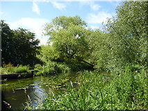 TQ0578 : River Colne by Robin Webster