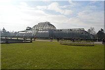TQ1876 : The Palm House by N Chadwick