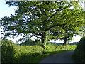 TQ4148 : Evening sun in Monks Lane by Marathon
