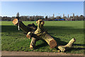 SP2964 : Fallen and trimmed weeping willow, St Nicholas Park, Warwick by Robin Stott