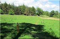 NO2206 : Path across field, Lomond Hills by Bill Kasman
