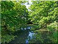 TL6300 : Pond near Fryerning St. Mary's by Roger Jones