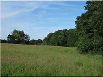TL6400 : Field and footpath near The Grove, Fryerning by Roger Jones
