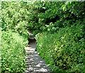 J3469 : Path, Belvoir forest, Belfast (June 2017) by Albert Bridge