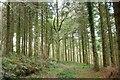 SW9968 : End of the track, Hustyn Wood by Derek Harper