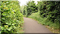 J4669 : Foot and cycle path, Comber bypass (June 2017) by Albert Bridge
