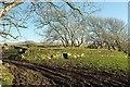 SX1180 : Hogg hole near Furhouse Farm by Derek Harper