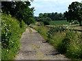 TF8312 : The Peddars Way at Great Palgrave by Mat Fascione