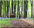 NX4350 : Horse Riding in the Forest by Jon Alexander