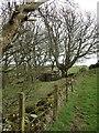 NX4136 : Broad Lane Wood by Jon Alexander
