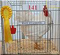 SJ7077 : Prize Poultry (3) by Anthony O'Neil