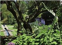 SX9050 : Garden at Coleton Fishacre by Derek Harper