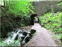 NO2307 : Archway under bridge, Maspie Den, Lomond Hills by Bill Kasman