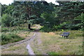TQ1461 : Path and seat on Oxshott Health by David Martin