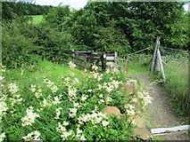 NO2603 : Gate on path to Purin Hill car park, Lomond Hills by Bill Kasman