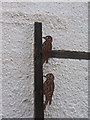 NT9660 : Woodpecker attack on Old Lobster Cottage by M J Richardson