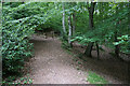 ST1638 : Path out of Rams Combe by Bill Boaden
