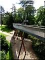 ST8589 : The Stihl Treetop Walkway at the National Arboretum by Oliver Dixon