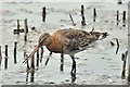 J3777 : Godwit, Belfast harbour (July 2017) by Albert Bridge