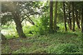 SO9742 : Pond and trees, Bricklehampton by Derek Harper