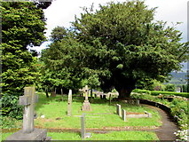 SO2813 : Yew in the village churchyard, Llanfoist by Jaggery