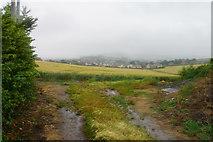ST0642 : Wheat field on the edge of Watchet by Bill Boaden