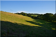 SS7401 : Mid Devon : Grassy Field by Lewis Clarke