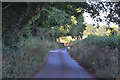 SS7401 : Mid Devon : Country Lane by Lewis Clarke