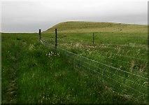 NO2206 : Maiden Castle, Lomond Hills by Bill Kasman