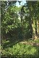 SO9639 : Long Plantation by Derek Harper