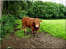 H5956 : Bullock, Sess by Kenneth  Allen