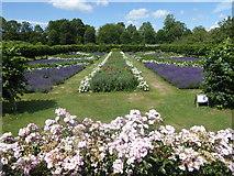 TQ5243 : The Union Flag Garden at Penshurst Place by Marathon