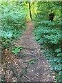 ST1282 : Footpath through Garth Wood by Alan Hughes