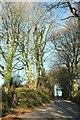 SX0882 : Lane at Lanteglos by Derek Harper