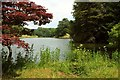 SX8778 : Higher Water, Ugbrooke Park by Derek Harper