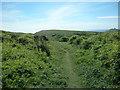 TV5795 : Shooters Bottom vegetation by Andrew Diack