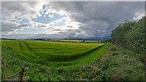 NH5757 : Field margin Teandore by valenta