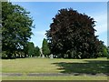 SK4345 : Copper beech, Heanor Cemetery by Alan Murray-Rust